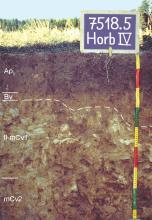 Das Foto zeigt ein Bodenprofil unter Acker. Es handelt sich um ein Musterprofil des LGRB. Das vier Horizonte umfassende Bodenprofil ist über 80 cm tief.