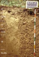 Das Foto zeigt ein Bodenprofil unter Wald. Es handelt sich um ein Musterprofil des LGRB. Das Bodenprofil ist über 1 m tief.
