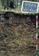 Das Foto zeigt ein Bodenprofil unter Nadelwald. Es handelt sich um ein Musterprofil des LGRB. Das sechs Horizonte umfassende Bodenprofil ist etwa 70 cm tief.