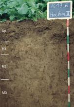 Das Foto zeigt ein Bodenprofil unter Acker. Es handelt sich um ein Musterprofil des LGRB. Das vier Horizonte umfassende Profil ist über 1 m tief.