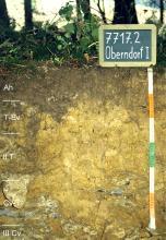 Das Foto zeigt ein Bodenprofil unter Wald. Es handelt sich um ein Musterprofil des LGRB. Das fünf Horizonte umfassende Bodenprofil ist etwa 70 cm tief.