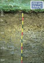 Das Foto zeigt ein Bodenprofil unter Wald. Es handelt sich um ein Musterprofil des LGRB. Das fünf Horizonte umfassende Profil ist 1,40 m tief.