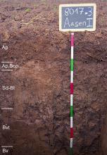 Das Foto zeigt ein Bodenprofil unter Acker. Es handelt sich um ein Musterprofil des LGRB. Das fünf Horizonte umfassende Profil ist über 1 m tief.