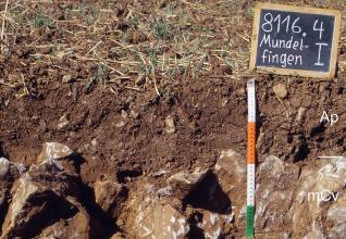 Das Foto zeigt ein Bodenprofil unter Acker. Es handelt sich um ein Musterprofil des LGRB. Das nur zwei Horizonte umfassende Profil ist etwa 40 cm tief.