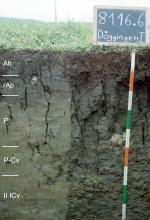 Das Foto zeigt ein Bodenprofil unter Grünland. Es handelt sich um ein Musterprofil des LGRB. Das rissige, fünf Horizonte umfassende Profil ist 90 cm tief.