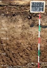 Das Foto zeigt ein Bodenprofil unter Wald. Es handelt sich um ein Musterprofil des LGRB. Das sechs Horizonte umfassende Profil ist 90 cm tief.