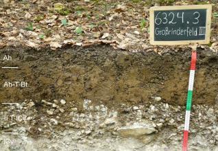 Das Foto zeigt ein Bodenprofil unter Wald. Es handelt sich um ein Musterprofil des LGRB. Das vier Horizonte umfassende Profil ist nur 50 cm tief.