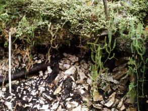 Das Foto zeigt ein Bodenprofil unter Wald. Das sehr steinige Profil ist etwa 70 cm tief.