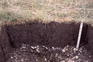 Das Foto zeigt ein Bodenprofil unter gebleichtem Grünland. Das sehr dunkle, im unteren Drittel mit Schutt gefüllte Profil ist 30 cm tief.