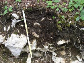 Das Foto zeigt ein Bodenprofil unter Wald. Das Bodenprofil ist 45 cm tief.