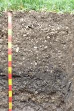 Das Foto zeigt ein Bodenprofil unter Pflanzenwuchs. Das Profil ist 1,60 m tief.