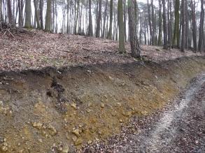 Das Bild zeigt die schräge Kante eines nach rechts abfallenden, bewaldeten Hanges. Das offenliegende Bodenprofil hat eine graubraune bis gelblich braune Farbe und ist teilweise mit Steinen durchsetzt.