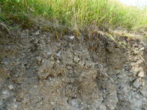 Nahaufnahme eines Bodenprofils unter Grünland. Der locker gesetzte Boden ist mit kleinen Steinen durchsetzt und graubraun gefärbt.