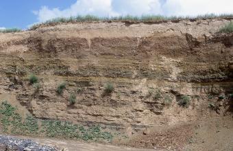 Blick auf eine Steinbruchwand mit unterschiedlichen, waagrecht verlaufenden Schichten, von hellbrauner und glatter Krume über olivbraune Schichten in der Mitte bis zu unregelmäßiger Oberfläche im unteren Teil der Wand.