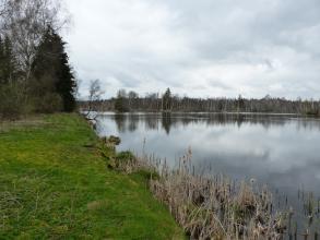 Blick auf Ufer und See in einem Moorgebiet. Das Ufer links im Bild ist mit Moos und Schilf bewachsen. Das hintere Ufer ist entlang des Sees bewaldet.
