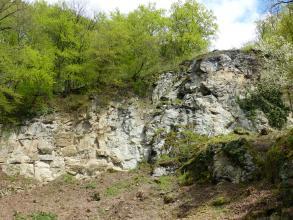 Steinbruch aus gelblichem bis grauem Gestein. Darüber befindet sich Gebüsch.