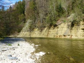 Blick auf ein steiles, nach oben hin dicht bewaldetes Flussufer. Im Vordergrund links ist ein Stück des Gegenufers zu sehen, das flach und steinig ist.