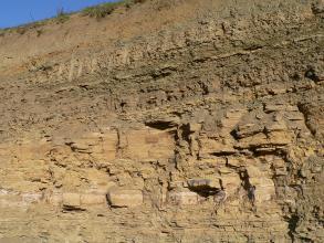 Auf diesem Bild ist ein Teil einer Steinbruchwand zu sehen. Unter braunen, dünn gebankten Schichten verlaufen hellbraune Bänke mit größeren Gesteinsbrocken, die teilweise etwas herausragen.