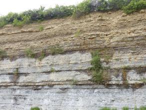 Teilansicht einer länglichen Steinbruchwand. Aufgeschlossen sind von unten bis zur Bildmitte hellgraue bis gelblich graue Schichten, darüber folgen hellbraune Lagen. Die flache Kuppe sowie einige Ritzen sind mit Sträuchern bewachsen.