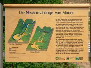 Das Bild zeigt eine hölzerne Schautafel mit Erläuterungen und grafischen Darstellungen zur Entwicklung der Neckarschlinge von Mauer.