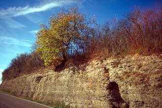 Das Bild zeigt eine Straßenböschung, die sich in perspektivischer Ansicht nach links verkleinert. Die Böschung besteht aus verwittertem Gestein, die Kuppe ist mit Bäumen und Sträuchern bewachsen.