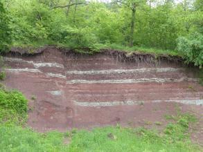 Blick auf einen Gesteinsaufschluss an einem Waldhang. Die hohe, rötlich graue Gesteinswand fällt nach rechts hin etwas ab. Oben und unterhalb der Bildmitte verlaufen mehrere waagrechte weißliche Streifen.