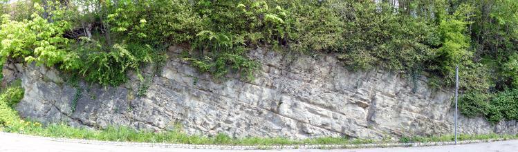 Panoramabild einer Straßenböschung mit offenliegendem, hellgrauem Gestein. Das Gestein ist schräg von links oben nach rechts unten gebankt. Die Kuppe ist dicht mit Bäumen und Buschwerk bewachsen.
