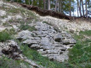 Blick auf einen nach links ansteigenden, oben bewaldeten Hang. Im Bildmittelpunkt stehen geschichtete graue Steine an, die eine ovale Wand bilden. Darüber ist gelbliches Gestein aufgeschlossen. Der übrige Hang ist zugewachsen.