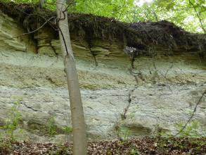 Teilansicht einer grünlich grauen Gesteinswand. In der Bildmitte durchzieht eine feinporige Lage das Gestein, unterhalb der bewachsenen Kuppe liegt plattiges Material auf. Rechts durchzieht ein vertikaler Riss das Gestein.