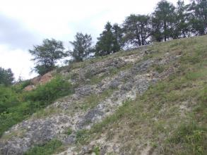 Blick auf einen gewölbten, nach rechts ansteigenden und oben bewaldeten Hang. Zwischen Grünbewuchs sind schräg verlaufende, grau gefärbte Gesteinsbuckel sichtbar.