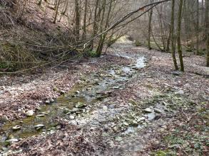Das Bild zeigt ein breites, an Waldhängen entlangführendes steiniges Bachbett mit nur wenig Wasser.