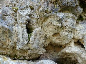 Nahaufnahme von knolligem, bräunlich bis bläulich grauem Gestein. Aus einer Nische links blicken Farnwedel hervor. Im oberen Bereich des Gesteins ist Moosbewuchs erkennbar. Unten und rechts tun sich weitere Nischen auf.