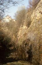 Seitliche Ansicht einer steilen, hohen Felswand, die, von rechts kommend, in der Bildmitte nach links abknickt. Die hellbraune bis unten graue Felswand ist mit Bäumen bewachsen. Im Hintergrund links ragen Hausfassaden über das Gestein.