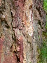 Nahaufnahme von vertikal verlaufenden, rissigen Gesteinsschichten in unterschiedlichen Farben.