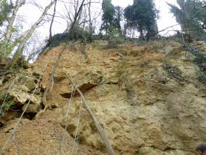 Aufwärts gerichteter Blick auf eine grünlich braune, leicht wellige Gesteinswand. Links ist das Gestein in einzelne Blöcke aufgespalten und bewachsen. Auch auf der Kuppe stehen Bäume.