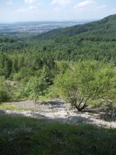 Blick nach unten über eine Schutthalde mit einzelnen Bäumen und Sträuchern. Gegenüber zieht sich rechts ein bewaldeter Hang hinauf. Im Hintergrund eine Ebene mit Wäldern und Siedlungen.
