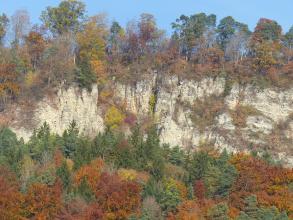 Blick auf eine gelblich graue, längliche Felswand. Das Gestein ist teils mit Sträuchern bewachsen und wird von herbstlich gefärbtem Wald eingerahmt.