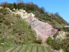Oberhalb eines ebenen Rebgeländes erhebt sich ein steiler, nach links ansteigender Hang. Der Hang ist mit Bäumen und Sträuchern bewachsen; in der Bildmitte ist jedoch auch offenes, weißes und rosafarbenes Gestein sichtbar.