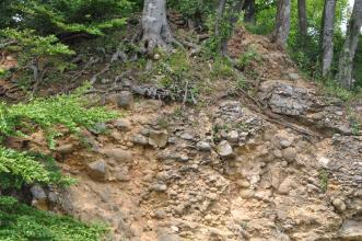 Blick auf einen Waldhang mit freiliegendem Gestein. Das rötlich braune bis graue Material besteht aus kleineren und größeren Steinen, die miteinander verbacken sind. Oberhalb der Bildmitte ist das Wurzelwerk eines Baumes zu sehen.