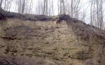 Blick auf eine hellbraune, leicht nach rechts abfallende Gesteinswand. An der Wand sind zahnartige Abdrücke erkennbar, die teils auch hervorstehen. Auf der Kuppe stehen Bäume.