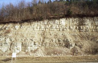 Blick auf eine langgezogene, nach rechts leicht ansteigende Steinbruchwand. Hellbraunes Material wird oben und links unten von weißlich gelben Blocksteinlagen abgelöst. Am Fuß der Wand sind Geröllhaufen. Die Kuppe oben ist bewaldet.