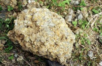 Großaufnahme eines rundlichen, hellbraunen bis grauen Gesteinsbrockens. Auf der Oberseite sind kleine, kugelförmige Stücke miteinander verbacken. Der Stein liegt auf teils grasigem, teils steinigem Boden.