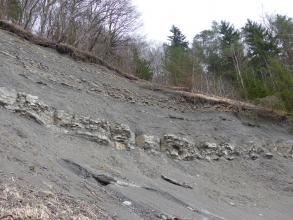 Seitenansicht eines nach links ansteigenden, grauen, oben bewaldeten Berghanges mit mehreren Gesteinsschichten. Das Bodenmaterial weist deutliche Rutschspuren auf. Rechts haben Bäume den Halt verloren.