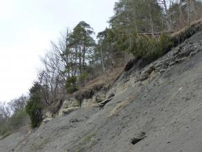 Seitliche Ansicht eines nach rechts ansteigenden, oben bewaldeten Berghanges. Unter der durchwurzelten Bodendecke oben liegt eine Gesteinsschicht frei. Bäume sind umgestürzt oder hängen schief über abgerutschtem Material.