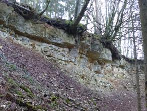 An einem nach links aufsteigenden Hang treten feine und gröbere Gesteinsblöcke hervor. Auf der Gesteinsschicht liegt eine Bodendecke mit Wurzeln und auskragenden Bäumen.