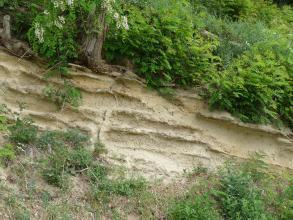 Blick auf eine nach rechts abfallende, hellbraune Gesteinsschicht, die bewachsenem Boden aufliegt. Das Gestein hat ausgeprägte, in Fließrichtung verlaufende Furchen. Auf der Kuppe stehen Farngewächse, links oben sind auch Baumwurzeln zu sehen.