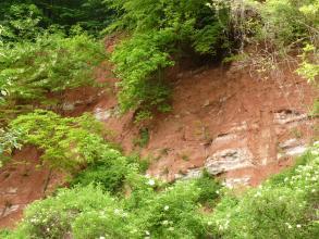 Blick auf eine hoch aufragende, rötliche Gesteinswand mit weißen Stellen. Die Wand ist rundum von Bäumen eingerahmt.