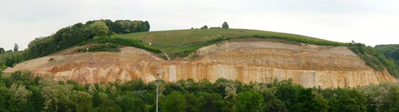 Panoramaansicht eines länglichen, aus rötlich braunem Gestein mit hellen Stellen bestehenden Steinbruches. Die hügelige, links bewaldete Kuppe ist mittig etwas heruntergezogen und ähnelt Augenbrauen. Im Vordergrund, am Fuß des Bruches, verläuft Wald.