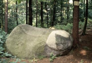 """Hier sieht man einen größeren Einzelfelsen, der auf Waldboden aufliegt. Der Stein ist links höher als rechts und von geschwungener, rechts stark abgerundeter Form. Die Farbe des Steins wechselt von olivgrün zu einem weißen und dunkelgrauen """"Kopf"""" rechts."""