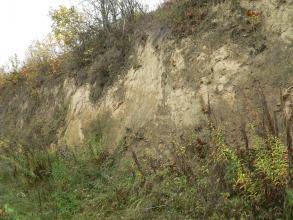 Das Foto zeigt eine hohe, graugelbe Wand aus Löss. Fuß, linke Seite sowie die obere Kante der Wand sind stark bewachsen.
